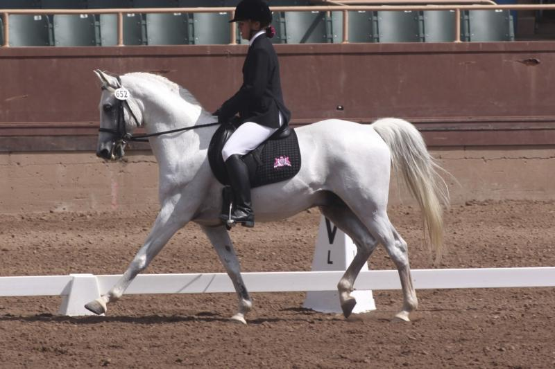 arabian stallion jassas dressage
